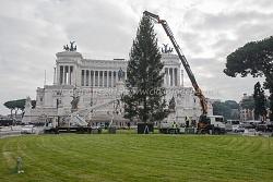 Allestimento alberi di Natale piazza Venezia e Colosseo, 3/12/2015