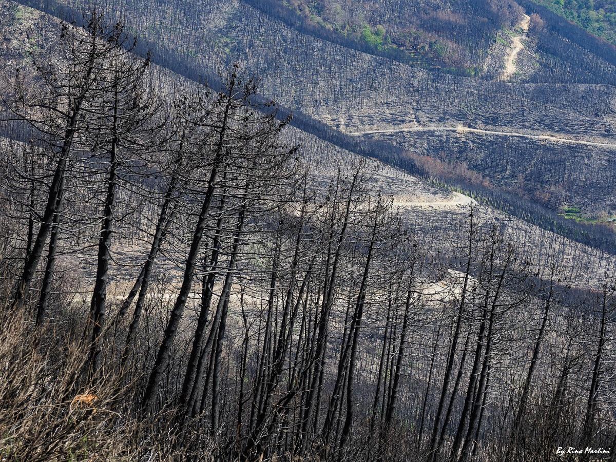 Renovatio:Monte Serra per non Dimenticare