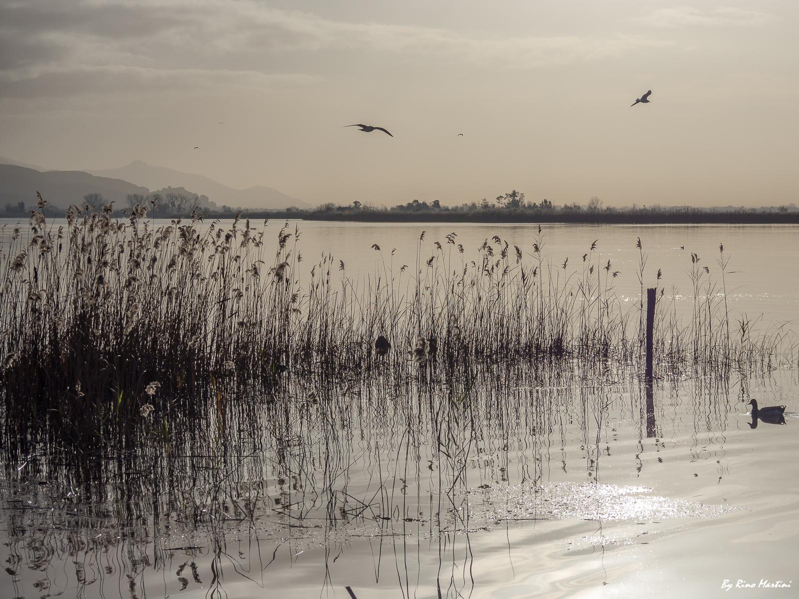 Lakes and Marsh