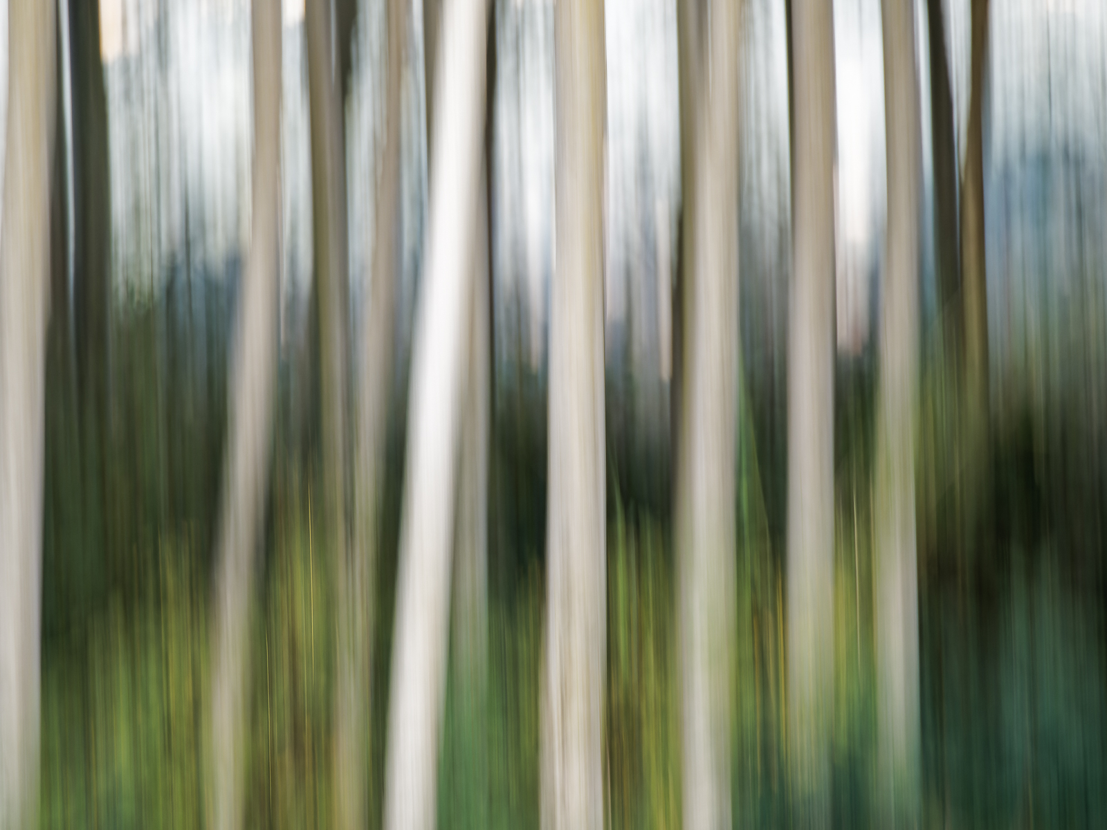 Trees Moving